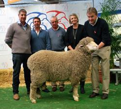 2013 Adelaide Ram Sale - Moorundie Poll Merinos